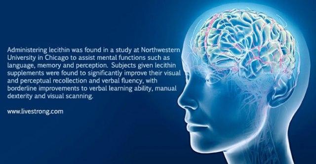 lecithin otak